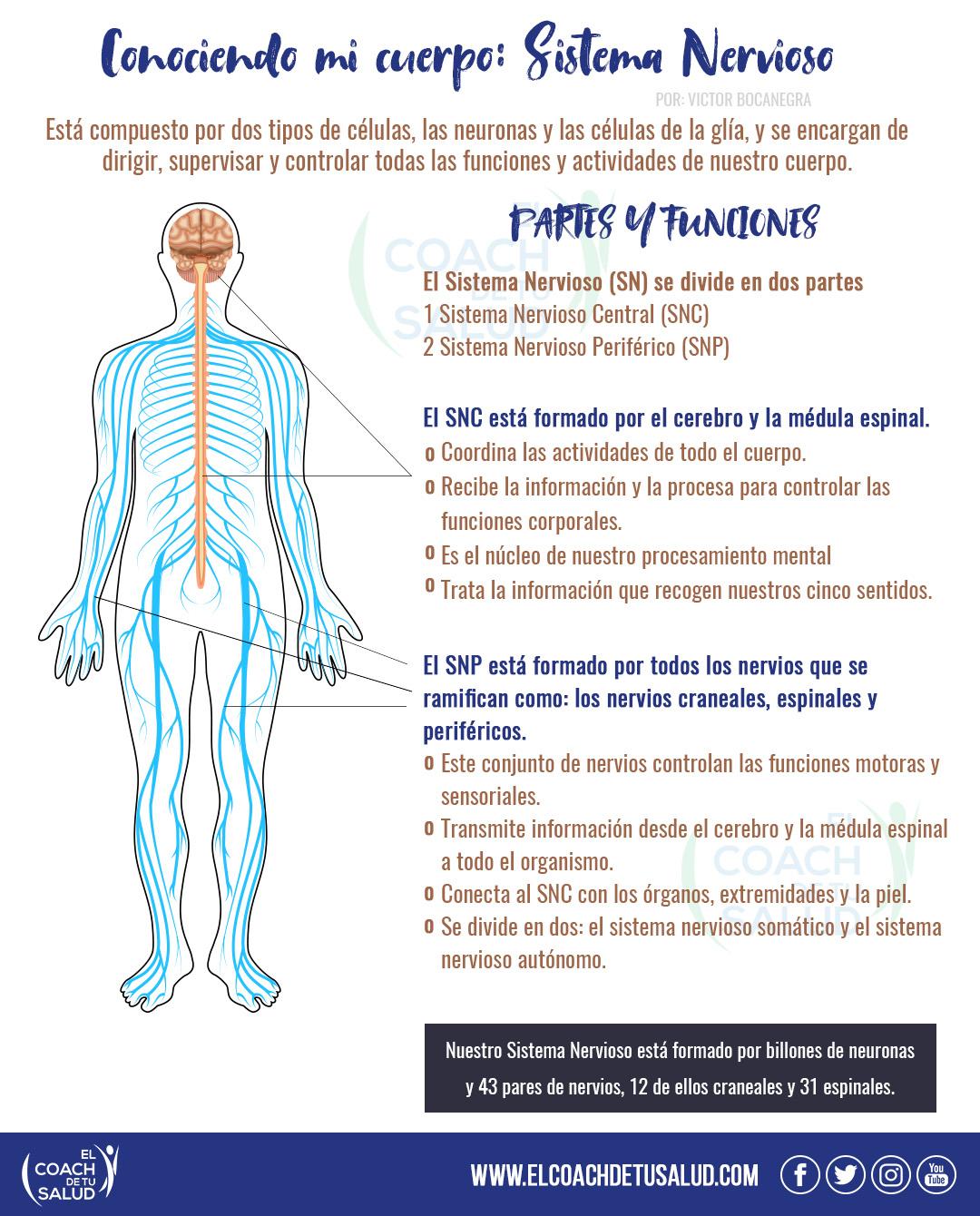 Infografía 37